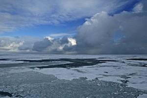 arctic_med