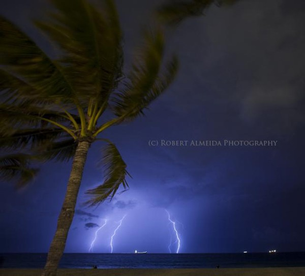 palm tree lightning storm ocean striking weather