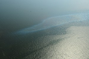 An oil sheen from the Frade oil spill.