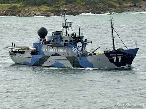 Sea Shepherd's flagship, the SSS Steve Irwin. Photo: Sea Shepherd