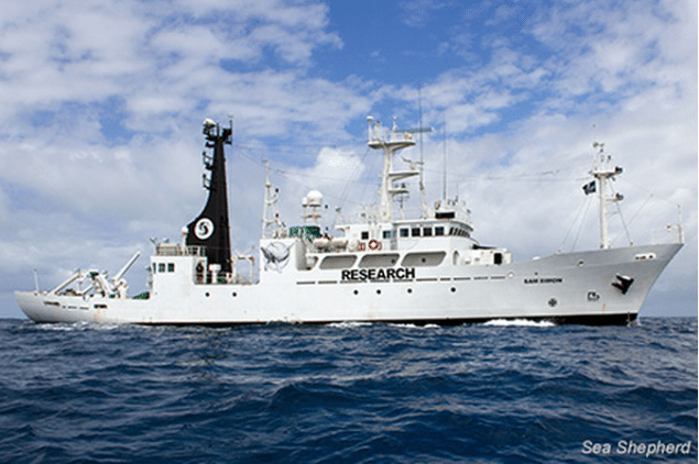 The SSS Sam Simon is the newest addition to the Sea Shepherd fleet and a former research ship of the Japanese Government. Photo: Sea Shepherd Conservation Society
